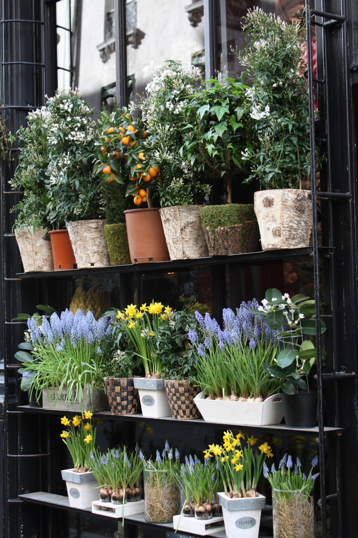 Flower shops of europe rebecca plotnick photography for Flower shop design layouts