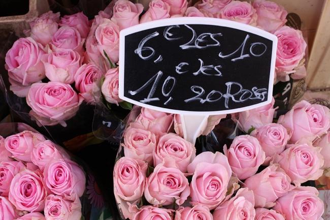 pink roses paris