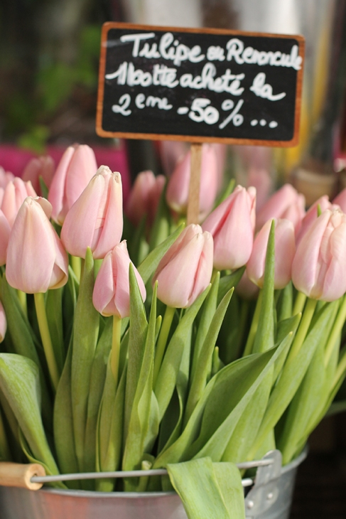 paris pink tulips